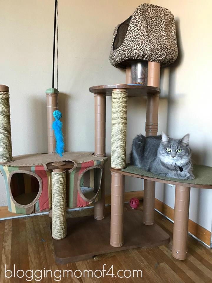 Oh my word! Look at how amazing this Kitty'Scape Deluxe cat house kit is! This is quite the cat house and Pixel is taking full advantage of it.
