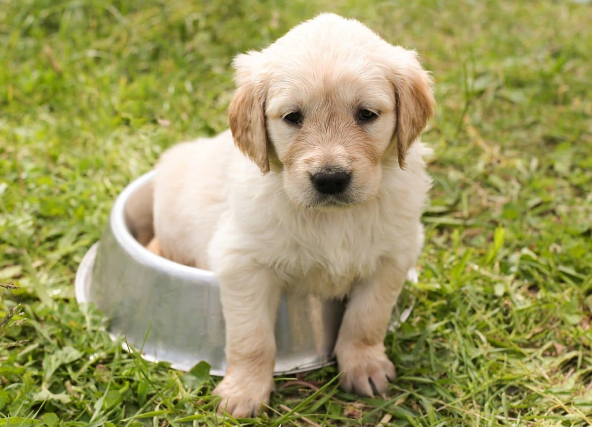Getting a new puppy isn't always easy but with tips, you can make the transition easier. Take a look at the following tips for bringing home a new puppy.